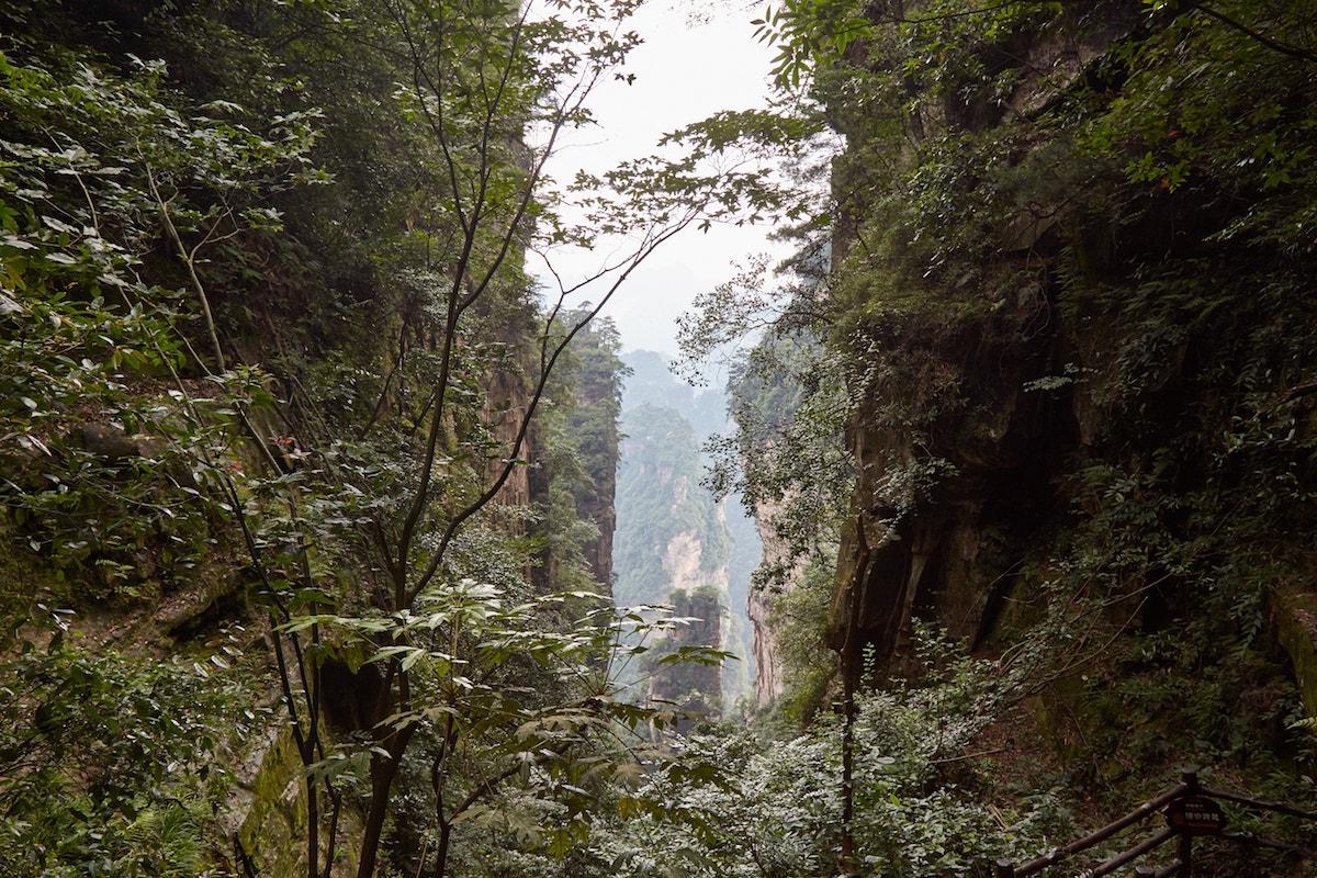 Zhangjiajie National Forest Park Yangjiajie